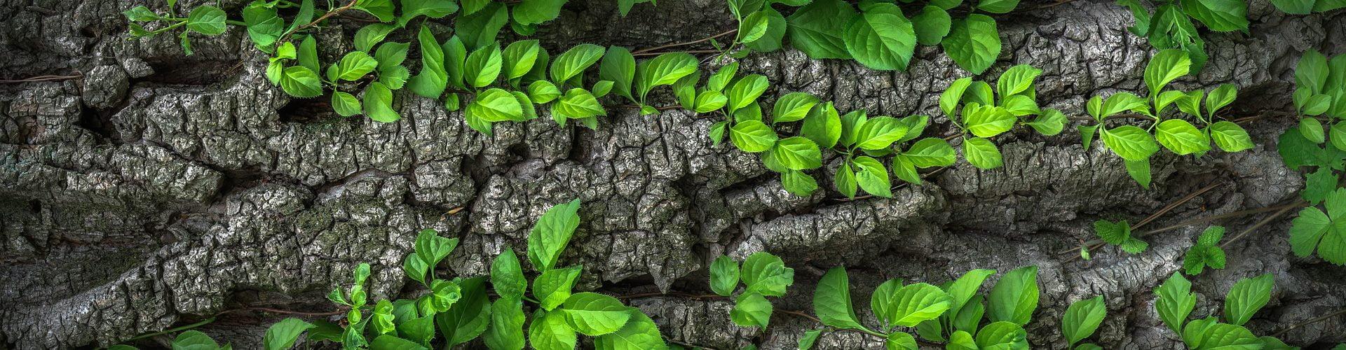 Aroma Sensation - Beratung und Vertrieb von sinnvollen und innovativen Duftlösungen